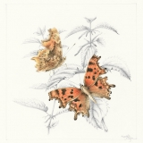 Comma and Nettle