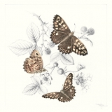 Speckled Wood and Bramble
