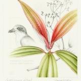 Galapagos Petrel and Galapagos Miconia