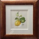 'Citrus Menton'