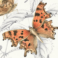 Butterflies at home - Chelsea Physic Garden