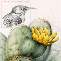 Endangered birds of the Galapagos Islands